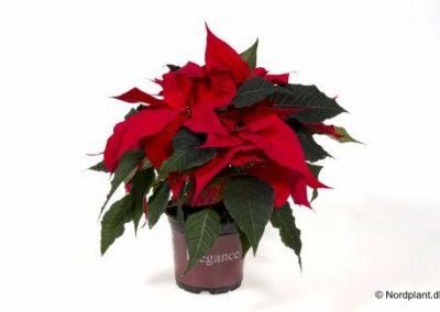 christmas-feeling-051212